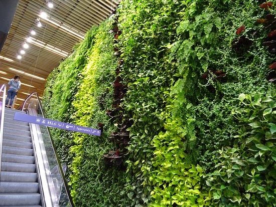 Purmerend, Nederländerna: levend schilderij plantenwand-winkelcentrum Eggert