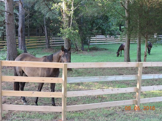 Atenas, GA: Working horse farm