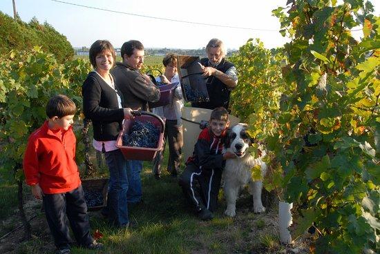 Bourgueil, Francja: vendanges 2009
