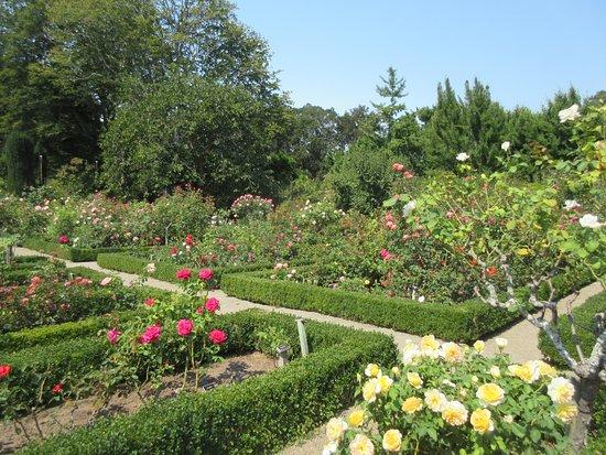 Rose garden - Picture of Filoli, Woodside - TripAdvisor