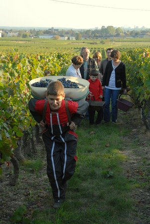 Bourgueil, France : VENDANGES 2009