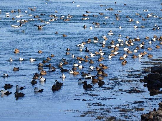 Buzzards Bay, MA: The springtime crowd along the Canal