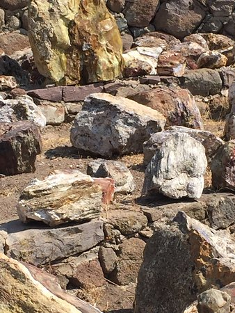 Petrified Forest of Lesbos: photo6.jpg