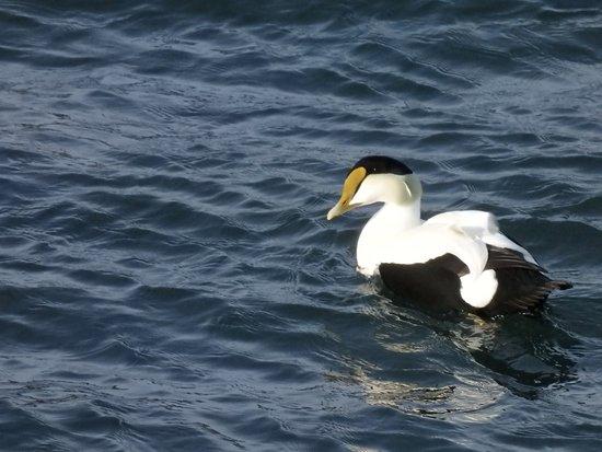 Buzzards Bay, MA: Ain't I handsome?