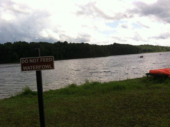Holly, MI: Lake Heron