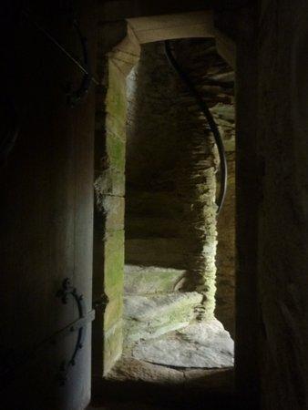 Ferns صورة فوتوغرافية