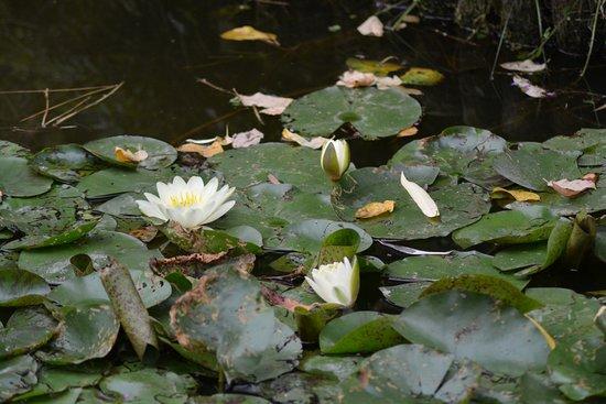 Saint-Cyr-en-Talmondais, Frankreich: agréable promenable autour des plans d'eau