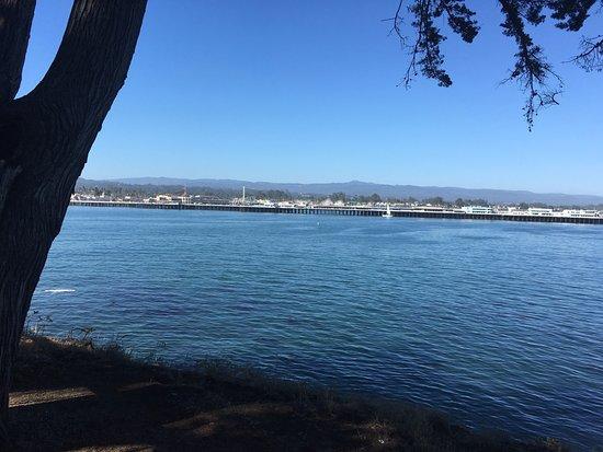 To Honor Surfing Monument: Santa Cruz Wharf