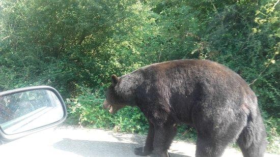 Ardeche, Francia: balade à coté des ours, normal, lol!