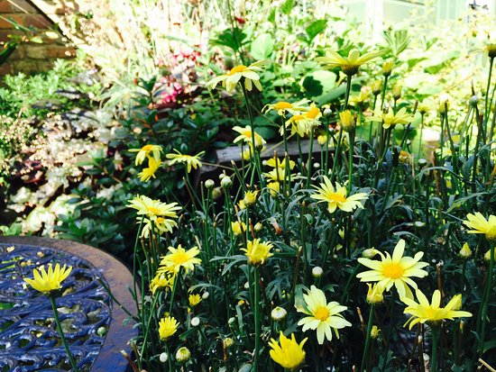 New Romney, UK: Summer 2016 - Our Courtyard Garden