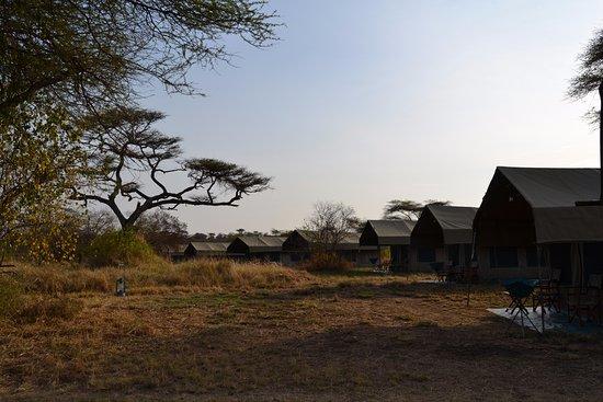 bett im zelt picture of serengeti halisi camp serengeti. Black Bedroom Furniture Sets. Home Design Ideas