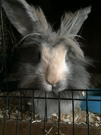 Calne, UK : Ruby Rabbit