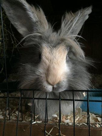 Calne, UK: Ruby Rabbit