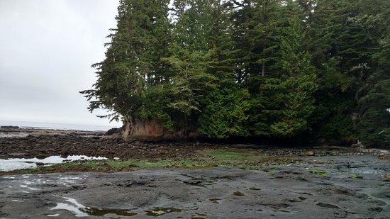 Port Renfrew, Canadá: Botanical Beach