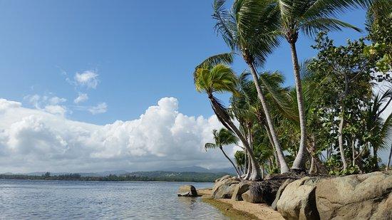 Gran Melia Golf Resort Puerto Rico Photo