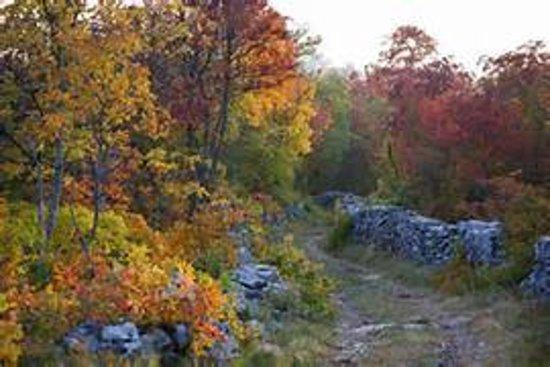 Carso Triestino: path in highlands