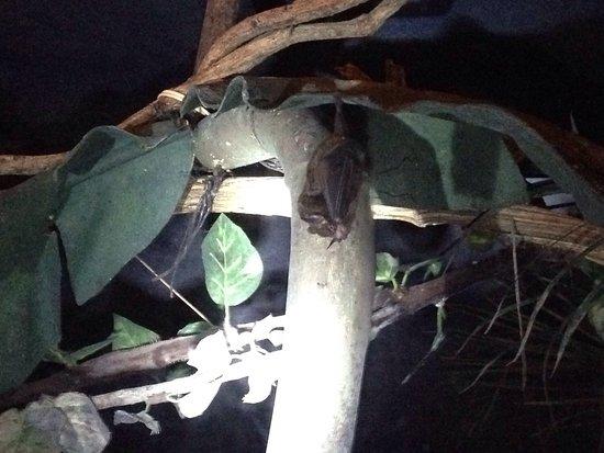 The Bat Jungle: photo0.jpg