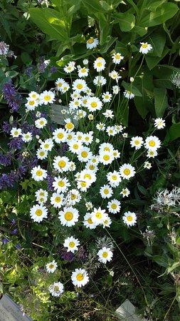 Villar-d'Arene, Frankrike: Petites fleurs