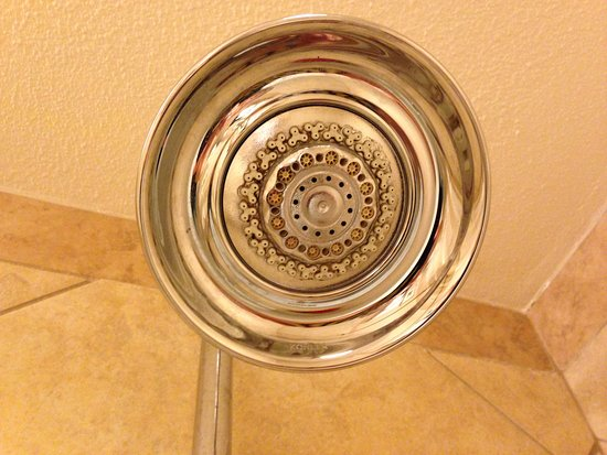 Pasco, WA: Shower head in our room.