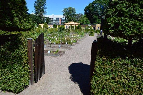 อุปซอลา, สวีเดน: Linnaeus Garden