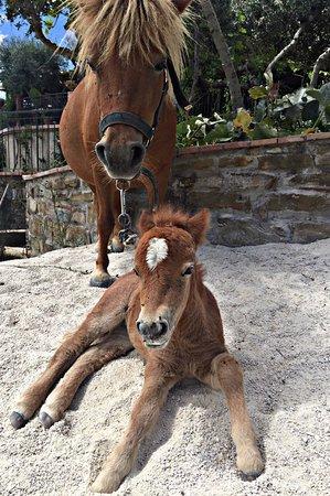 Agriturismo Oliveta: Ponies 🐴❤️