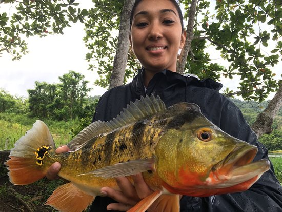 Peacock bass fishing in puerto rico picture of for Bass fishing trips
