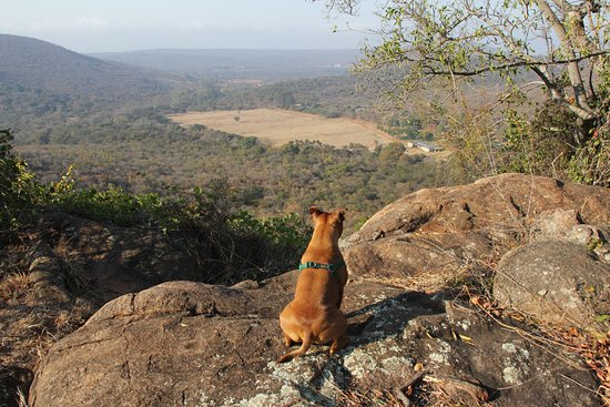 Louis Trichardt, Zuid-Afrika: Lovely hike to view a magnificant baobab tree