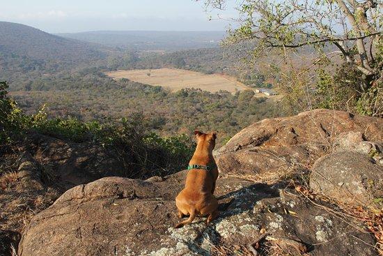 ลูอิสทริชาร์ด, แอฟริกาใต้: Lovely hike to view a magnificant baobab tree