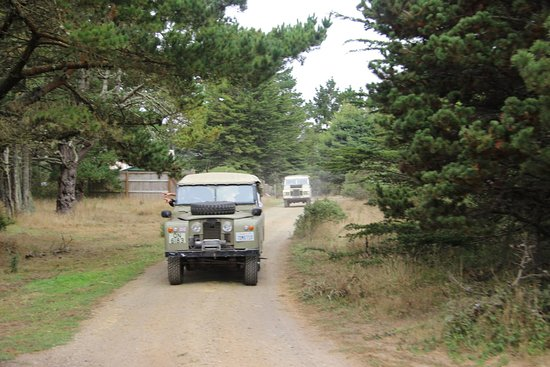 Point Arena, CA: Hop on and off these antique Land Rovers.