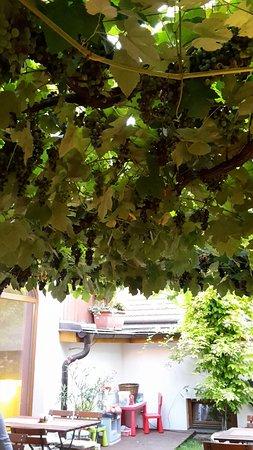 Mikulov, República Checa: Terasa pod živým viničom