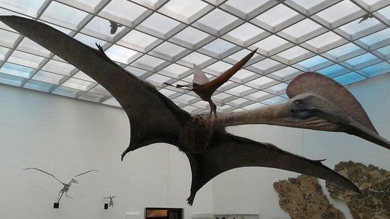 Naturkundemuseum Karlsruhe