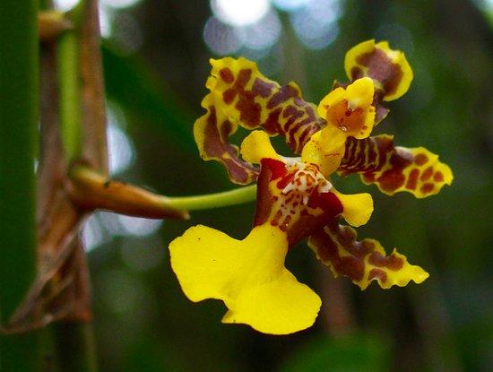 Santa Elena, Costa Rica: Orchid...