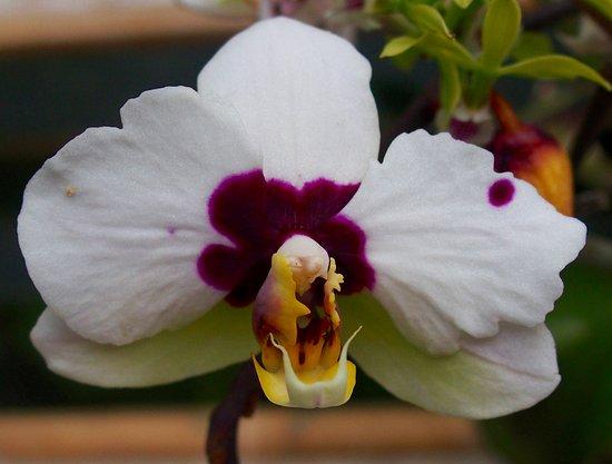 Santa Elena, Costa Rica: Orchid... really...
