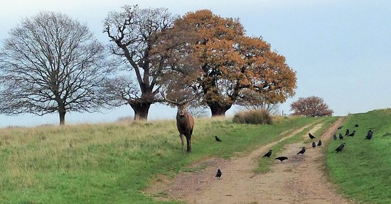 Richmond-upon-Thames, UK: A close encounter while walking the park in December