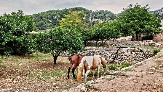 Bunyola, España: Auch Tiere gibt es hier