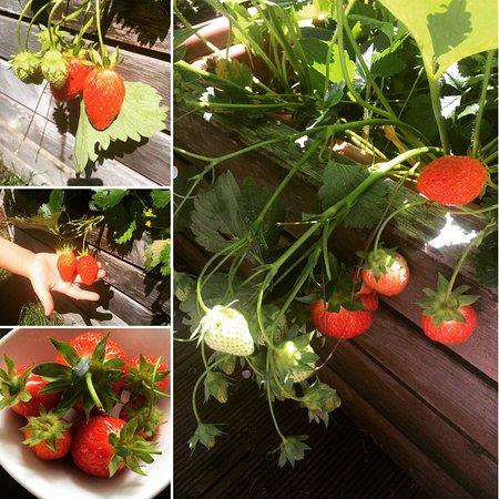 Garni Astrid: Fragole - Erbeeren - Strawberries