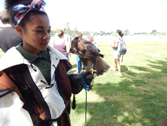 Paddock Wood, UK: Holly and a hawk