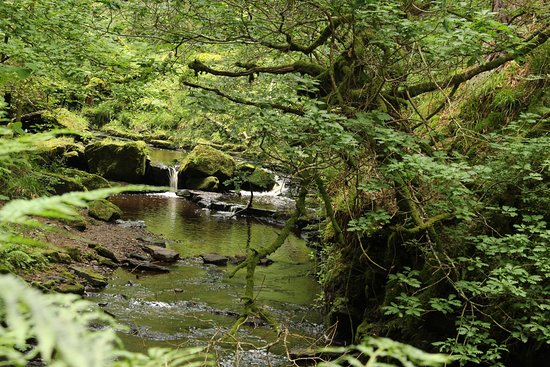 Bellingham, UK : Woodland walk with abundant waterfalls!