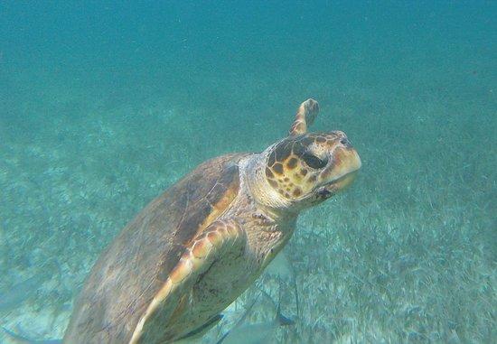 Caye Caulker, Belize: Stressless Tours