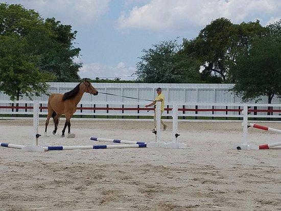 Miami Equestrian Club