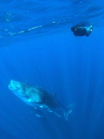 Buceo Xtabay: Tiburón Ballena, Contoy