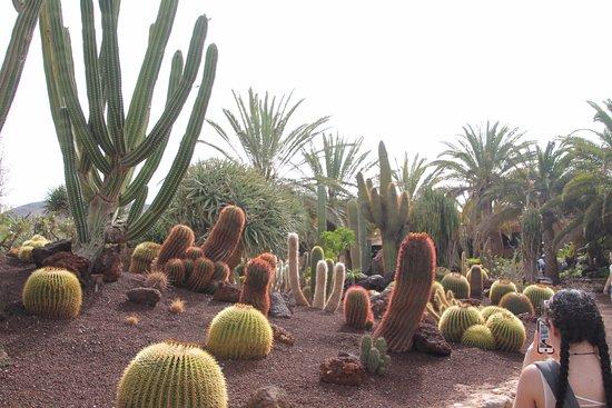 Oasis Park Fuerteventura: Beautiful Cactus Gardens