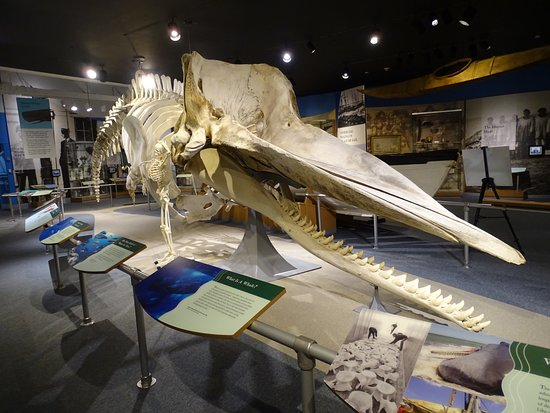 New Bedford, MA : Skeletal whale
