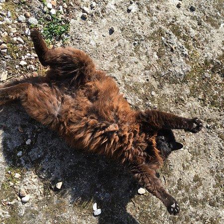 Saint-Aubin-sur-Scie, France: Le chat le plus câlin!