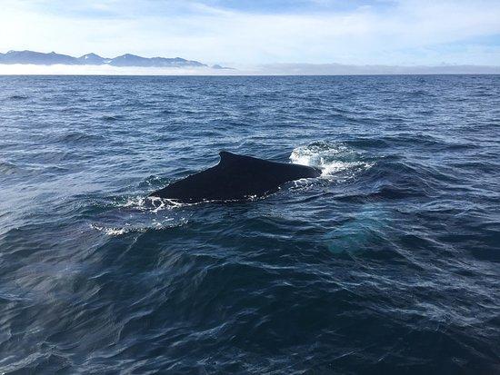 Husavik, Island: photo3.jpg