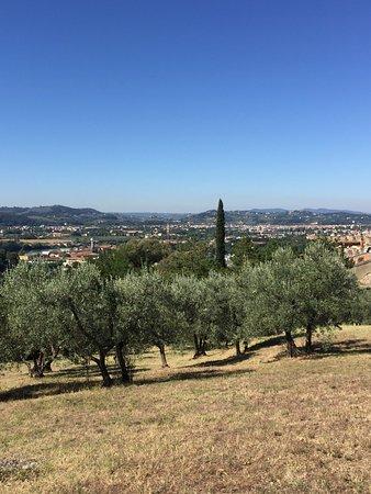 A Casa di Olivo: Olivenbäume