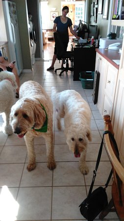 Cote's Bed & Breakfast : The welcoming commitee~ Jack & Annabelle