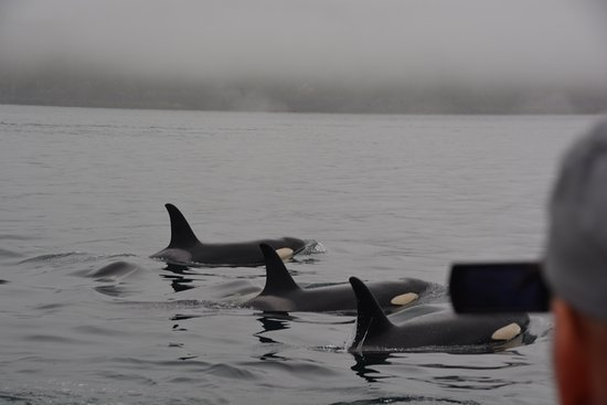 Heriot Bay, Canadá: Orca's are never far away!