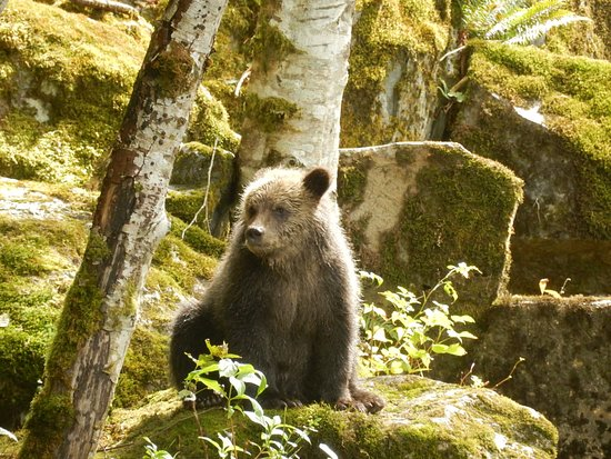 Telegraph Cove, Canadá: Emily's cub