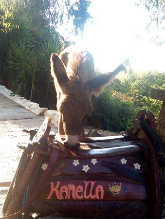 ولاية هيراكليون, اليونان: Kritiki Farma Donkey Tours
